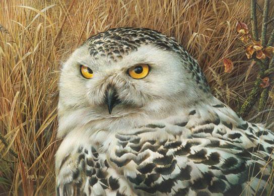 Optical Surveillance by Canadian Wildlife Artist Denis Mayer Jr.
