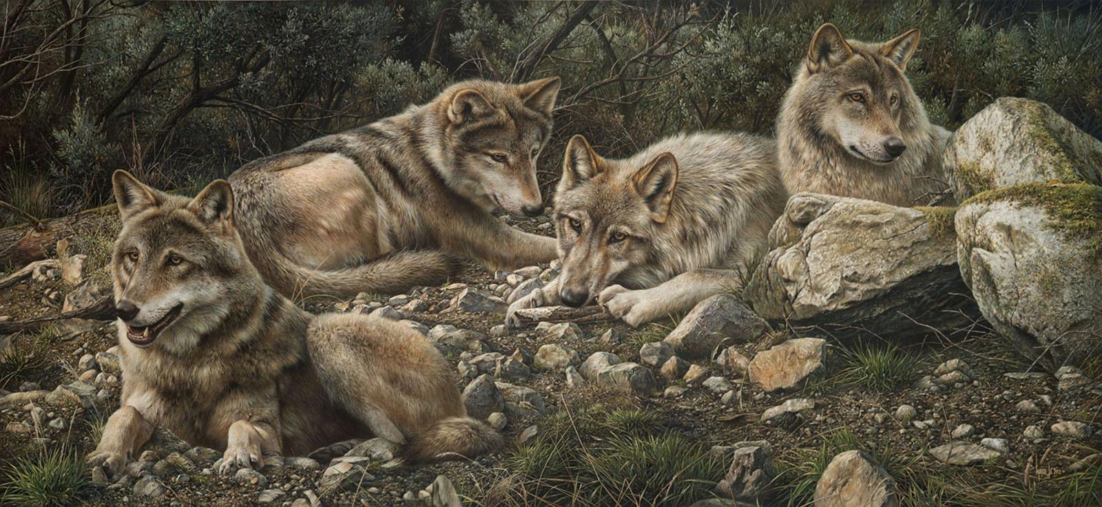 Forever Wild - Denis Mayer Jr.