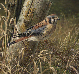 Commissions - Patience Is Rewarding