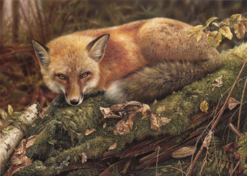 Commissions - Denis Mayer Jr.