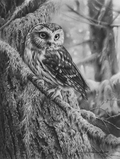 Owl Pencil Drawing by Denis Mayer Jr.