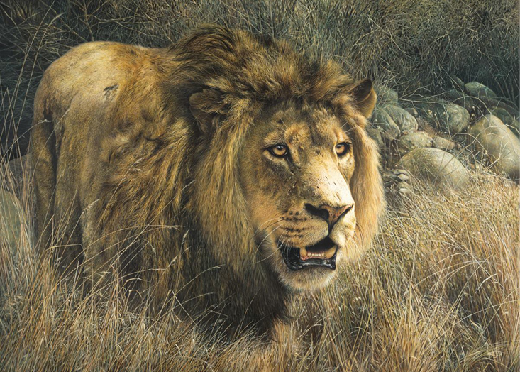 Fearless King by Denis Mayer Jr., Canadian Wildlife Artist