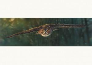Aerial Intensity by Canadian Artist Denis Mayer Jr.