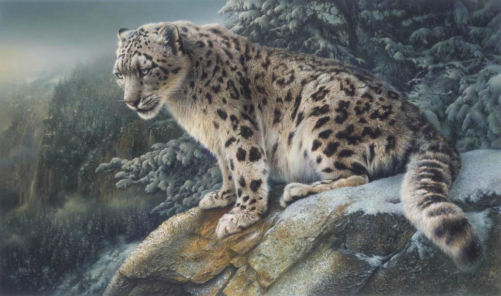 Original Wildlife Paintings by Denis Mayer Jr.