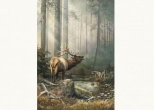 Echo in the Mist by Denis Mayer Jr.