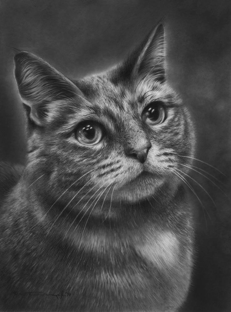 Cat - Pet Portraits