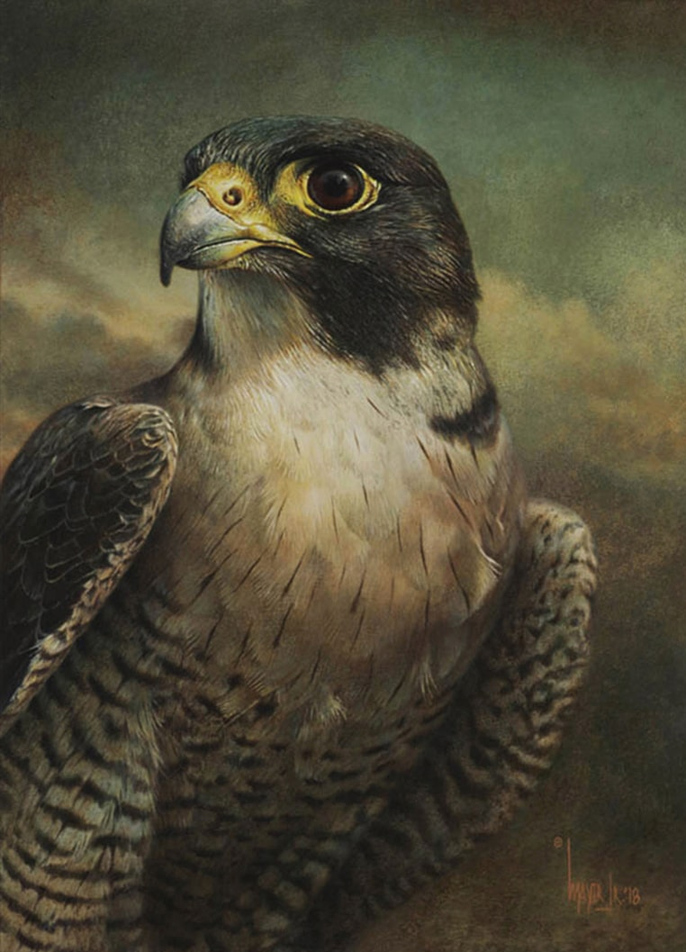 Peregrine Falcon, by Canadian Artist Denis Mayer Jr.