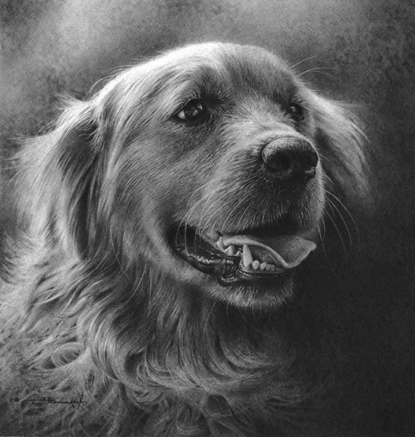 Dog - Pet Portraits