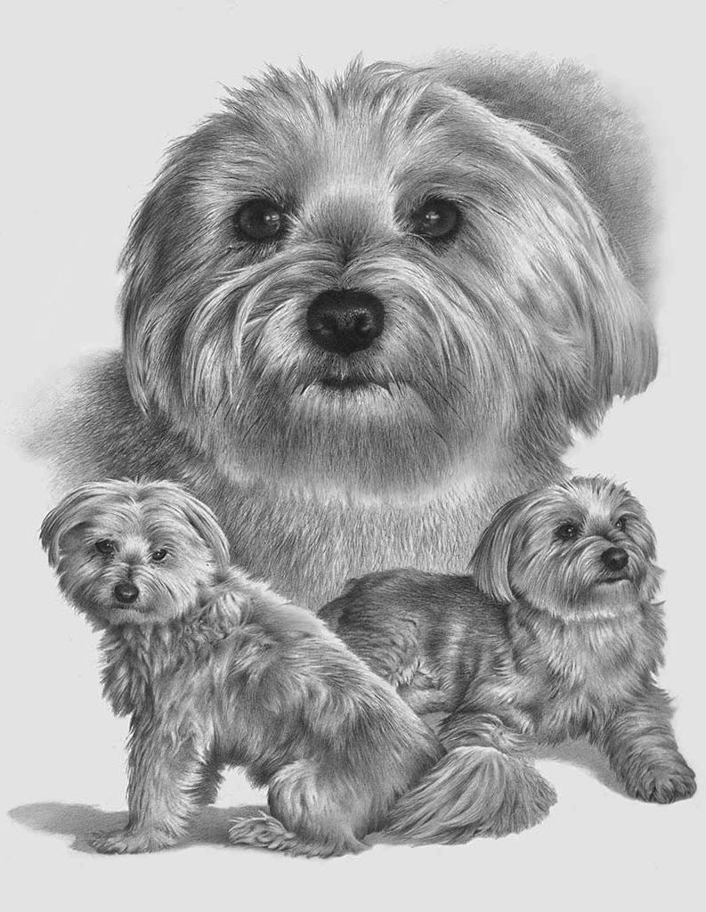Collage - Pet Portraits