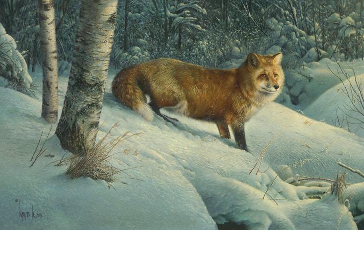 Cautious Roamer, by Canadian Artist Denis Mayer Jr.