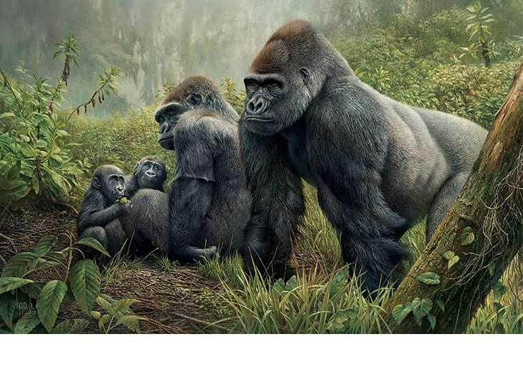 Jungle Awareness, Wildlife Artist Denis Mayer Jr